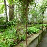 4 Verandah Studio garden